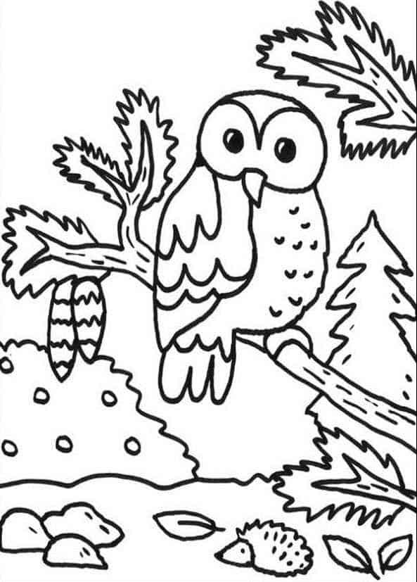 dibujos de buhos para colorear