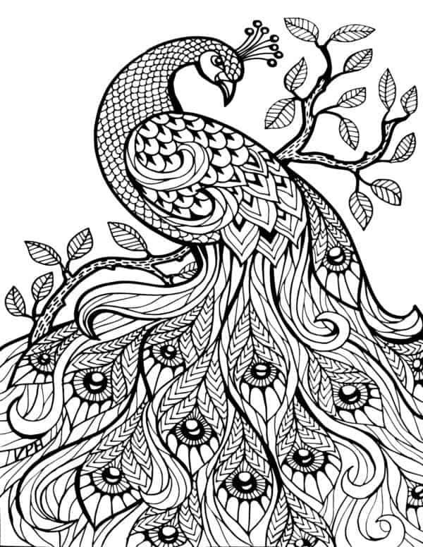 Mandala de pavo real para colorear
