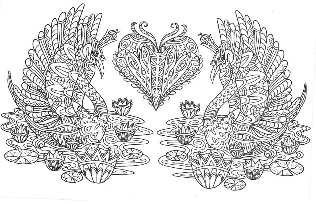Imagen de cisnes para pintar